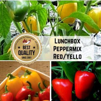 Lunchbox Peppermix Red/Yellow BIO Chilipflanze