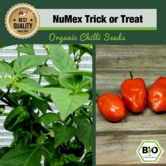 Organic NuMex Trick or Treat Chilli Seeds