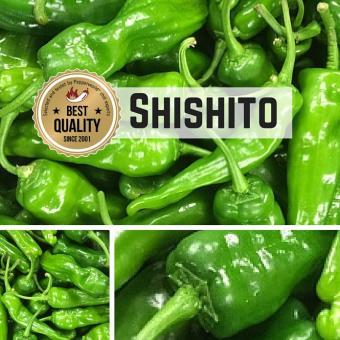 Shishito (Mellow Star F1) Chilisamen