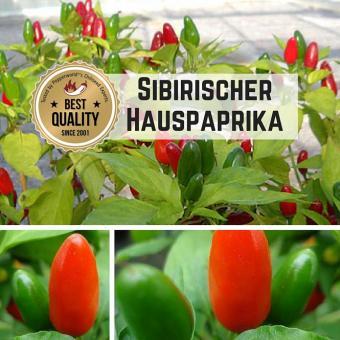 Sibirischer Hauspaprika BIO Chilipflanze