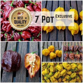 7 Pot Exclusive - Saat Spezial 2016
