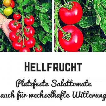 Hellfrucht Tomatensamen (Salattomate)