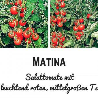 Matina Tomatensamen (Salattomate)