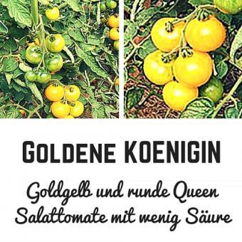 Goldene Königin Samen (Salattomate)
