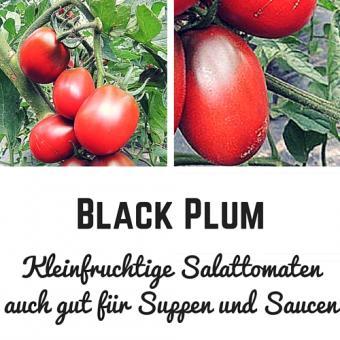 Black Plum Tomatensamen (Salattomate)