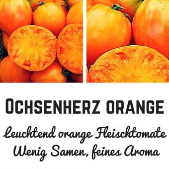 Ochsenherz orange Samen (Fleischtomate)