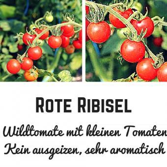 Rote Ribisel Tomatensamen (Wildtomate)