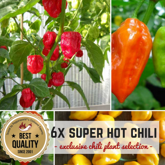SUPER HOT CHILIS BIO Pflanzen-Power-Pack