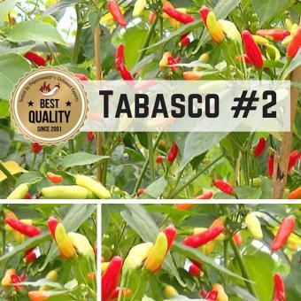 Tabasco Chilipflanze