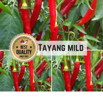 Taeyang mild Chilisamen