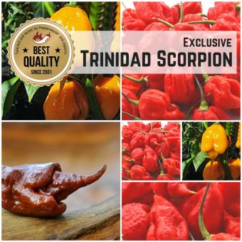 """Saat Sortiment """"Trinidad Scorpion"""""""