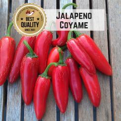 Jalapeno Coyame Chilisamen