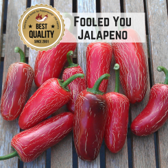 Jalapeno Fooled You Chilli Seeds