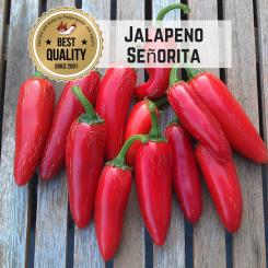 Jalapeño Senorita Chilisamen