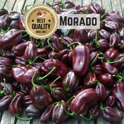 Morado Chilli Seeds