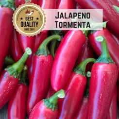 Jalapeño Tormenta Chilisamen