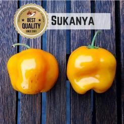 Sukanya Chilli Seeds