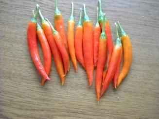 Thai Denchai Chilli Seeds