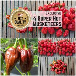 4 Musketeers Super Hot Exclusive - Saat Spezial 2020