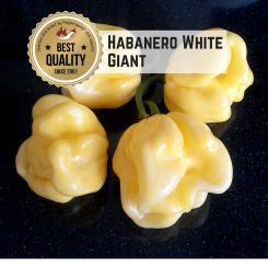 Habanero White Giant Chilli Seeds