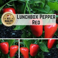 Lunchbox Pepper RED Pepper Seeds