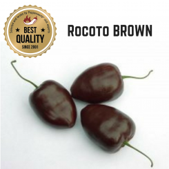 Rocoto Brown Organic Chilli Plant