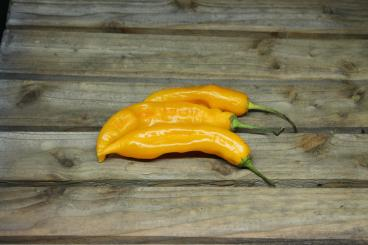 Aji Golden Chilisamen
