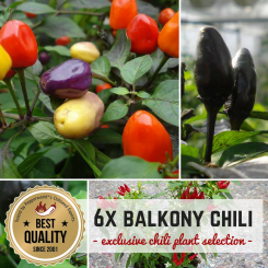 HOT BALCONY Organic Plants-Power-Pack
