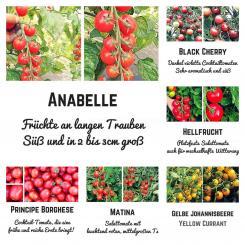 Bio Saat Sortiment- 6 exklusive Tomatensamen für dein heimisches Gewächshaus
