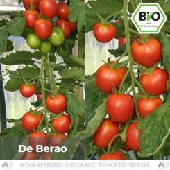 Organic De Berao tomato seeds (salad tomato)
