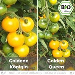 Organic Golden queen seeds (salad tomato)