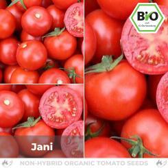 Organic Jani tomato seeds (salad tomato)