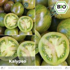 Organic Calypso tomato seeds (salad tomato)