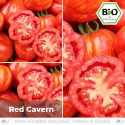 Organic Red Cavern tomato seeds (salad tomato)