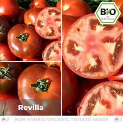 Organic Revilla tomato seeds (salad tomato)