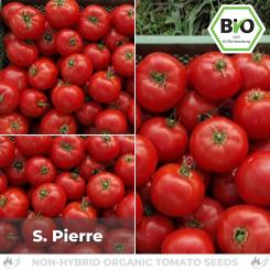 Organic S. Pierre Tomato Seed (flesh tomato)