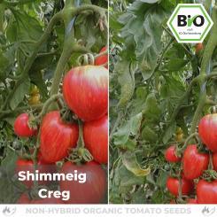 Organic Shimmeig Creg tomato seeds (salad tomato)