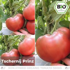 Organic Tschernij Prince Tomato Seed (flesh tomato)