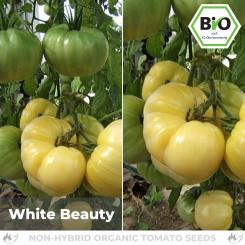 Organic White Beauty Tomato Seed (flesh tomato)