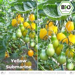 Organic Yellow Submarine Tomato Seed (Cocktail Tomato)