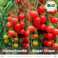 Organic Sugar Grape Tomato Seed (Cocktail Tomato)