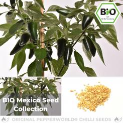 BIO Mexico Seed Collection