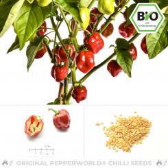 Organic Red Savina Chilli Seeds