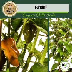 Fatalii Chilli Seeds