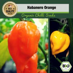 BIO Habanero Orange Chilisamen
