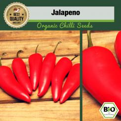 Organic Jalapeno Chilli Seeds