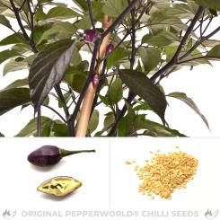 Biquinho purple hot Chilisamen