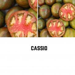 BIO Cassio Tomatensamen (Fleischtomate)