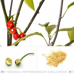 Cereja da Amapa Chilli Seeds
