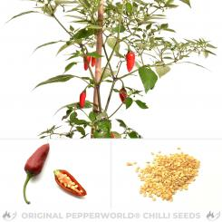 Chenzo Chili Seeds